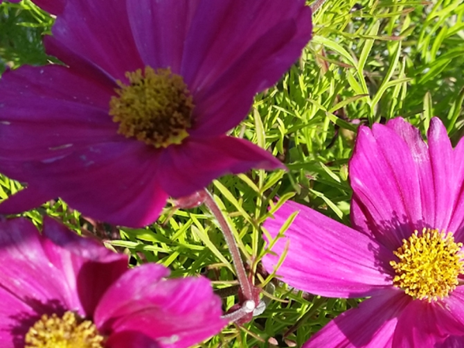 2014-07-02 16.19.20-sommerblomst-A